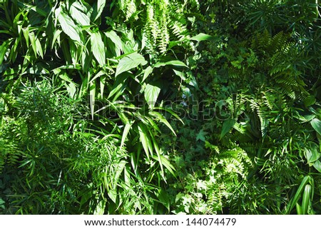 green environmentally friendly forest vegetation background - stock photo
