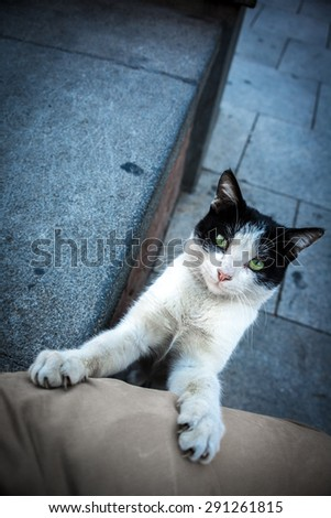 Green-Eyed black and white stray cat looking into the camera with its claws out and front legs resting on someone's leg. Taken in Tbilisi, Georgia. - stock photo