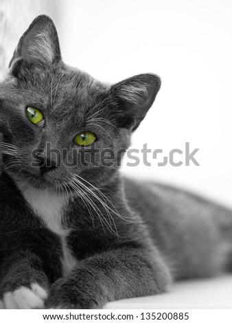 green-eyed cat - stock photo