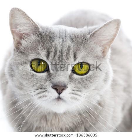 Green eyed cat - stock photo