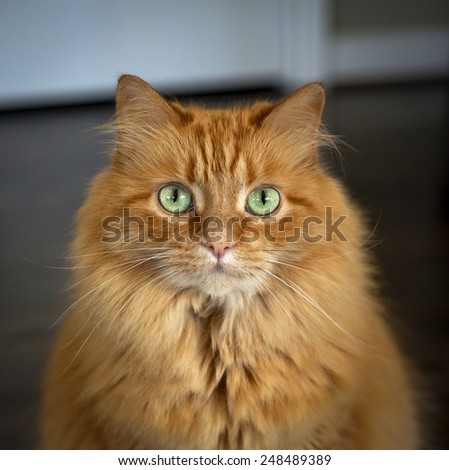 Green eyed cat staring at viewer