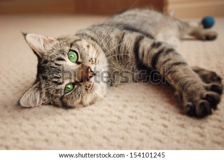 Green eyed kitten relaxing on cream carpet - stock photo
