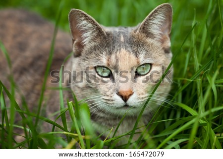 Green-eyed tortoiseshell-tabby cat sitting down in long green grass