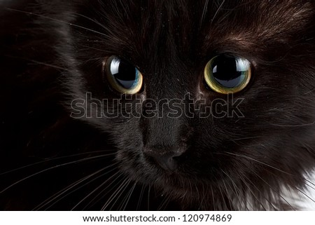 Green eyes of a black cat