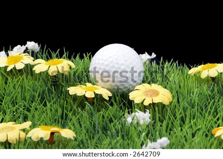 green fairway with daisies, isolated on black background - stock photo