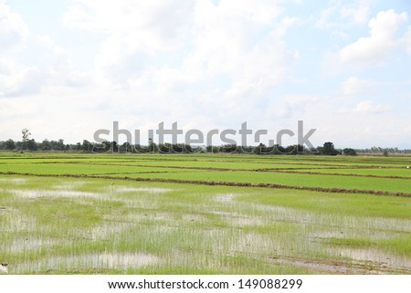 green farm from northern thailand