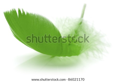 Green Feather in soft-focus view. Close-Up. With white background - Isolated. - stock photo