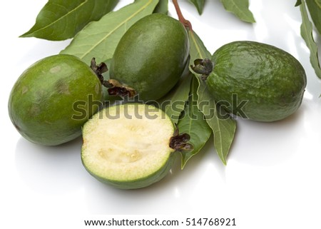 Green feijoa and laurel branch isolated on white background