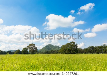 Green feild with clear sky and mountain background - stock photo