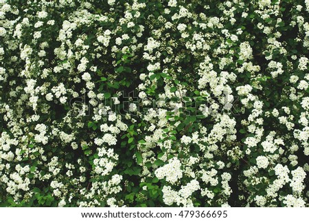 green fence with small white flowers