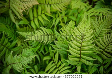 green fern as a background, close-up. - stock photo