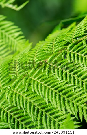 green fern background - stock photo