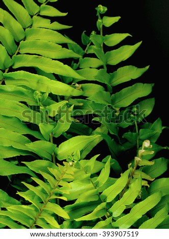 Green fern fronds on black background as image for Earth Day on April 22  - stock photo