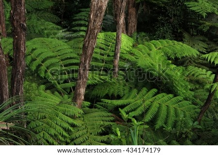 Green fern in a rain forest. Typical vegetation in New Zealand. - stock photo