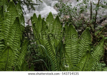 green fern in nature and forest
