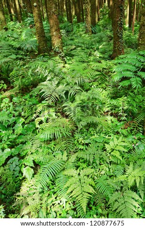 Green fern in tropical forest - stock photo