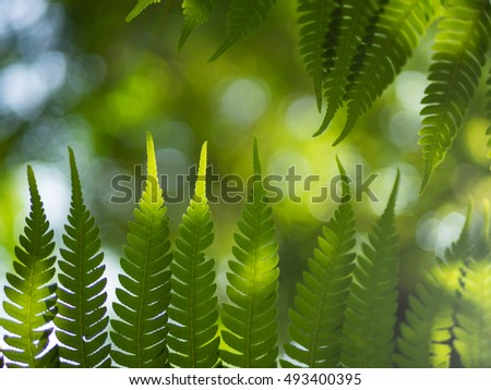 Green fern leaf in the forest and sunlight background.