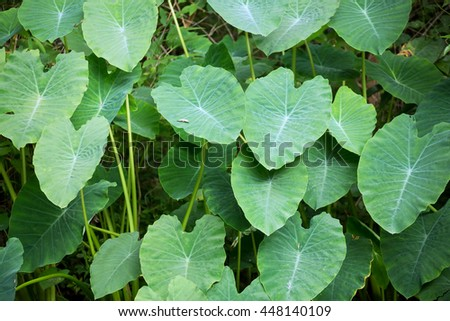 Green fern leafs with heart shape background or texture in tropical forest.  - stock photo