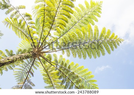 green fern leaves against blue sky background - stock photo