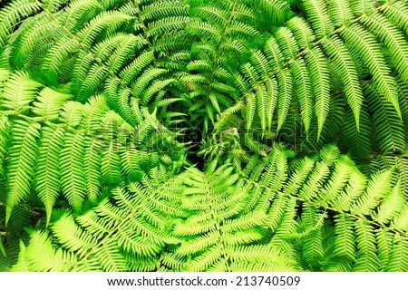 green fern leaves from above - stock photo