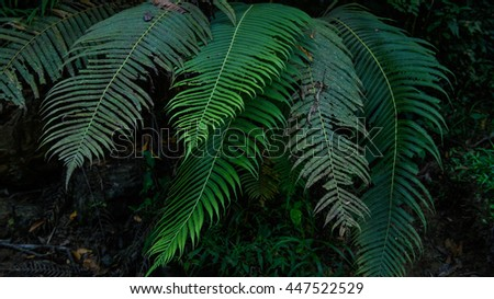 Green fern leaves in forest - stock photo