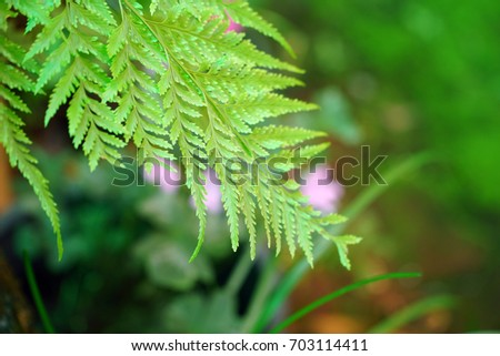 Green fern leaves in the natural park. Beautiful sunshine day. Feel fresh.