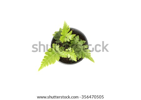 green fern top view on white background - stock photo
