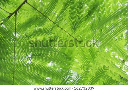 Green ferns background texture - stock photo