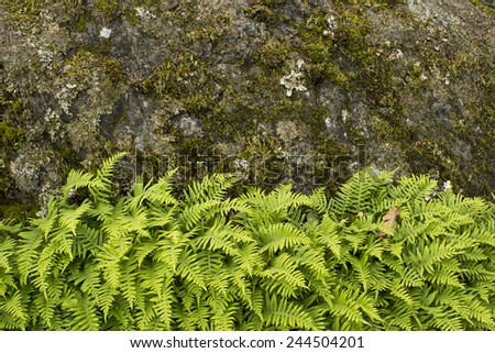 Green ferns growing in contrast against rock face