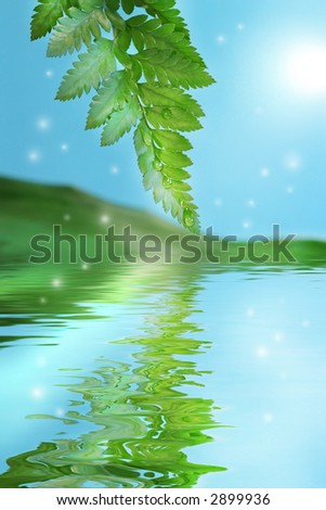 Green ferns with fireflies and water reflection - stock photo
