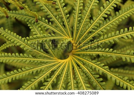 Green ferns with heart shape, Cameron Highlands, Malaysia - stock photo