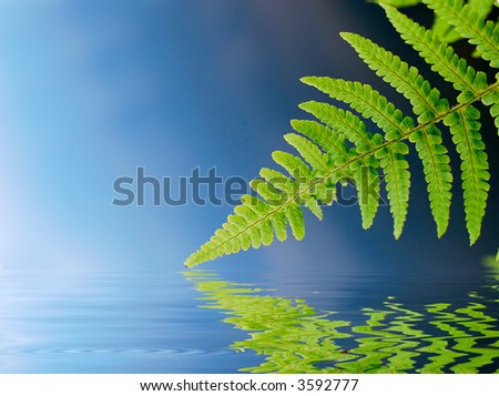 Green ferns with water reflection - stock photo