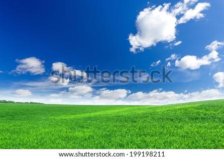 Green field - stock photo