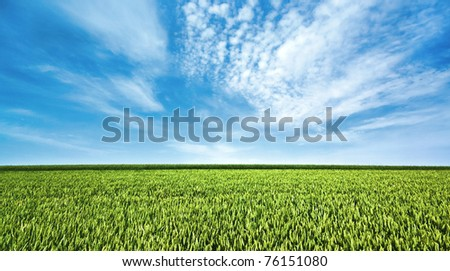 Green field and beautiful sky - stock photo