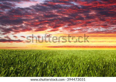 Green field and beautiful sky with sunlight - stock photo
