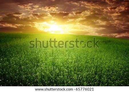 Green field and beautiful sunset. - stock photo