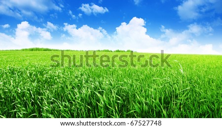Green field and blue sky. - stock photo
