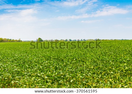 Green field and blue sky. Country summer landscape.