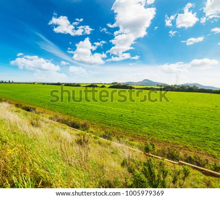 Green field and blue sky in the springtime in Sardinia, Italy