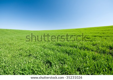 Green field and blue sky landscape - stock photo