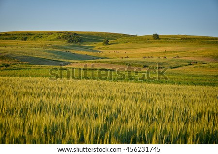 Green field and bright blue sky - stock photo