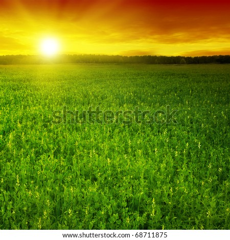 Green field and colorful sunset. - stock photo