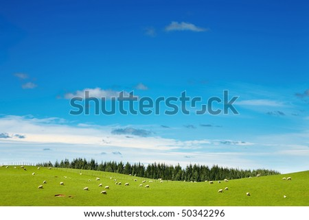 Green field and grazing sheep - stock photo