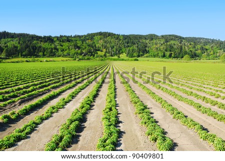 Green field and hills in Northern California - stock photo