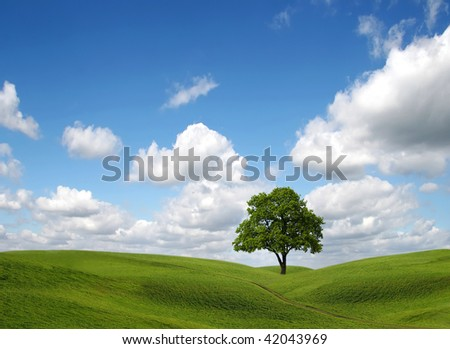 Green field and lonely tree under blue sky - stock photo