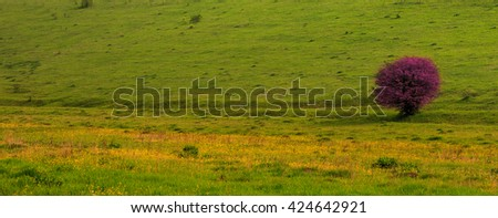 green field and pink tree - stock photo
