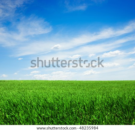Green field and sky blue with white cloud - stock photo