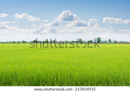 Green field and sky with white clouds. - stock photo
