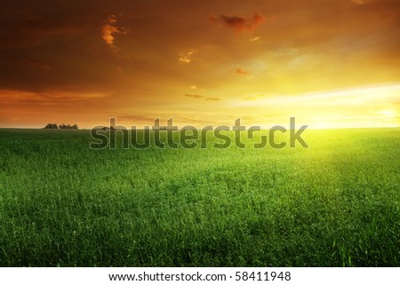 Green field and sunset. - stock photo