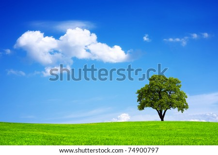Green field and tree - stock photo
